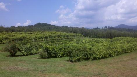 farm/tiger, ga/august 2012
