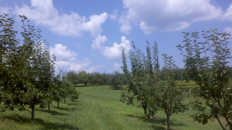 pear trees/tiger, ga/august 2012
