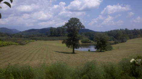 view from the farm/tiger, ga/august 2012