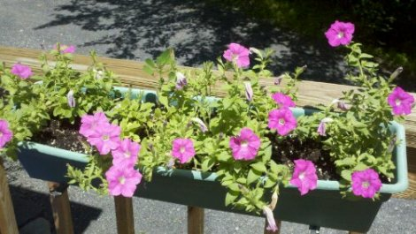 flowers/poconos/july 2012