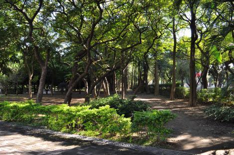 da'an park, taipei/dec 2012