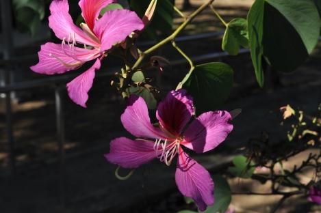 azaleas!/da'an park, taipei/dec 2012