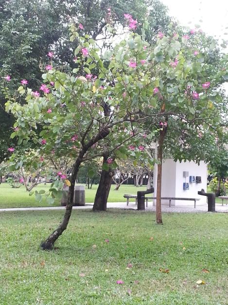 azalea tree/da'an park, taipei/dec 12, 2012