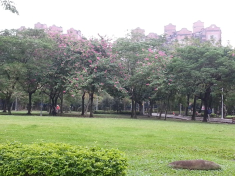 azalea trees/da'an park, taipei/dec 12, 2012
