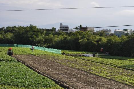 farm beyond the maritime university/taipei circle trail/jan 2013