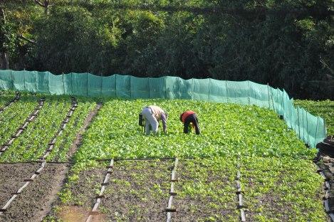 farmers in taipei city/taipei circle trail/jan 2013