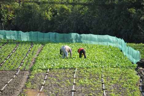farmers in taipei city/taipei circle trail/jan 2013