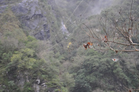 awesome spider with massive web/taroko, taiwan/jan 2013