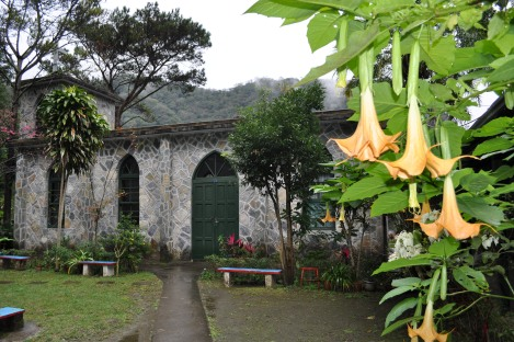 church + trumpet flowers/taroko, taiwan/jan 2013