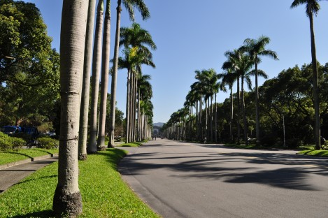 a look up royal palm boulevard from the main gate/taida/dec 2012