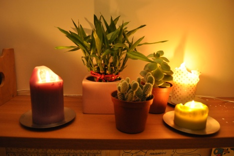 my plants/the crib, taipei/jan 2013