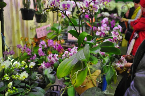 photo bombed by an orchid/da'an, taipei/jan 2013