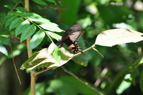 butterflies everywhere!/pulau ubin, singapore/march 2013