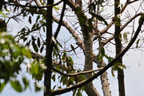birdwatching lens/pulau ubin, singapore/march 2013