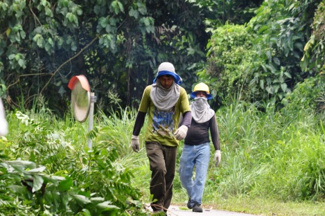 the landscaping work is never done in the jungle/pulau ubin, singapore/march 2013