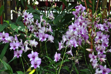 roof garden orchids at buddha tooth relic temple/singapore/march 2013