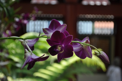 orchids/buddha tooth relic temple/singapore/march 2013